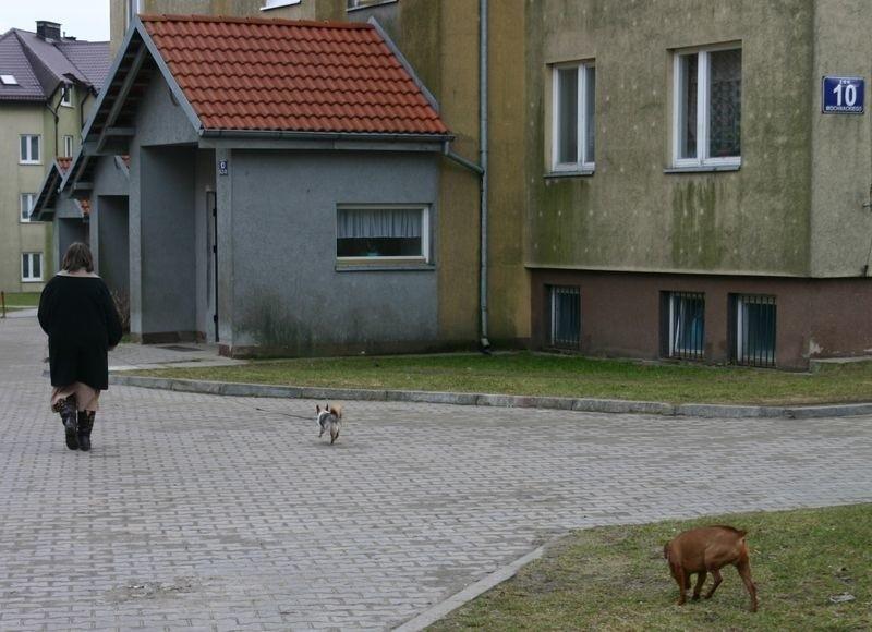Mieszkańcy ul. Mochnackiego nie mają gdzie wyrzucać psich odchodów.