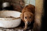 Ludzie zgotowali tym zwierzętom istne piekło na ziemi! Brudne, zaniedbane, ranne i cierpiące czekały na pomoc całymi tygodniami