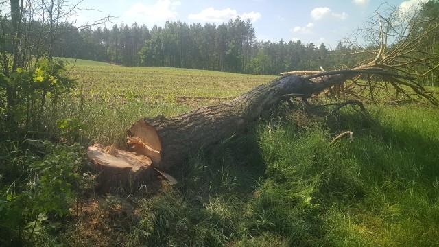 Ktoś podciął drzewo, aby przewróciło się na drogę. Sprawę bada policja.