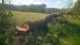 Bez owijania w bawełnę: Jakiś debil podciął drzewo. Mogły być ofiary śmiertelne!