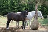 Makulatura, która ratuje konie!