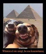 Światowy Dzień Psa 2020. Z tej okazji MEMY z dużymi i małymi pupilami. Psy dają tylko szczęście!
