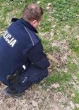 Poszedł na poranny spacer do lasu, znalazł pocisk! Niebezpieczna sytuacja w gminie Nowosolna