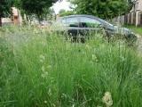 Zgierz zarasta trawą!