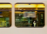 Pies lub kot w autobusie i pociągu? Sprawdź czy to dozwolone