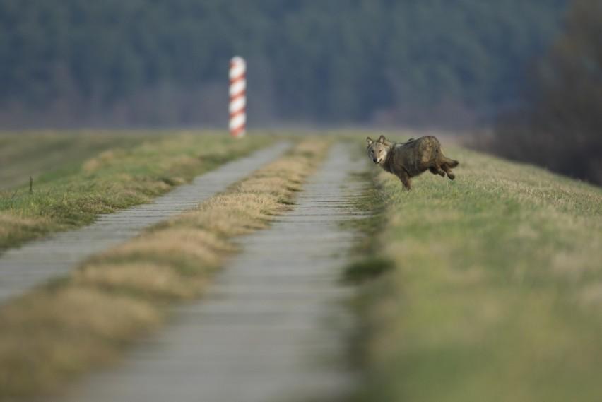 Grzegorz Sawko fotografią przyrodniczą zajmuje się od blisko...