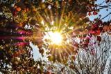 Pogoda na październik. Długoterminowa prognoza na cały miesiąc. Złota Polska jesień może zostać przegoniona przez wiatr i deszcz