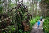 Rezerwat Przyrody Krzemianka to magiczne miejsce, które warto odwiedzić. Kładka w Puszczy Knyszyńskiej robi wrażenie (zdjęcia)