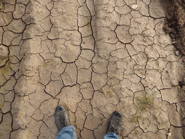 specustawa suszowaSpecustawa ma zapobiegać zarówno skutkom suszy, jak i ulewnych deszczów.