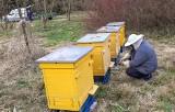 Pszczoły wróciły do rogowskiego arboretum. Po roku przerwy w arboretum znów są ule