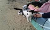 Zbiórka na wynajęcie mieszkania dla kociego taty. Czy bezdomny spod mostu na Rakoczego przyjmie pomoc?