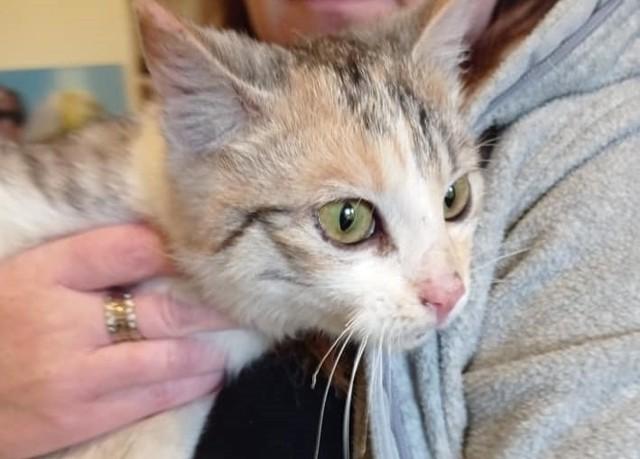 - Lokalna organizacja nie miała możliwości zabezpieczyć kotki. Kotka trafiła zatem pod naszą opiekę – informuje Stowarzyszenie S.O.S dla Zwierząt Wąbrzeźno