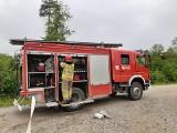 Pińczowscy strażacy ćwiczyli swe umiejętności na wypadek pożaru lasu [ZDJĘCIA]