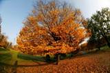 Zaczyna się jesień