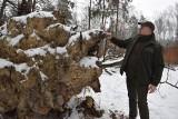 Wycinka drzew w Lasach Murckowskich w Katowicach oprotestowana. Leśnicy twierdzą, że to konieczne