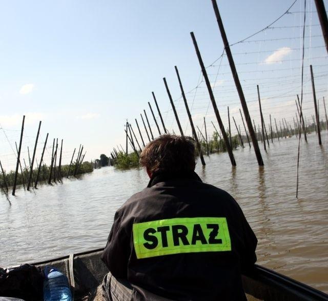 Powódź zniszczyła w gminie Wilków ok. 400 ha upraw chmielu. Plantatorzy stracili od 60 do nawet 100 tys. zł