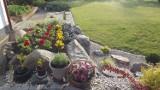 Wybieramy najpiękniejszy ogród, działkę lub balkon