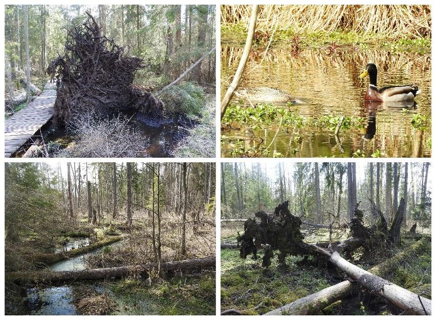Rezerwat Krzemionka - wiosna 2020