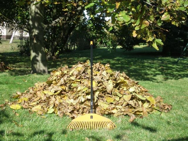 Jesień w ogrodzie: suche liście na trawnikuPrzed nastaniem zimowych chłodów, trawnik trzeba oczyścić z suchych liści.