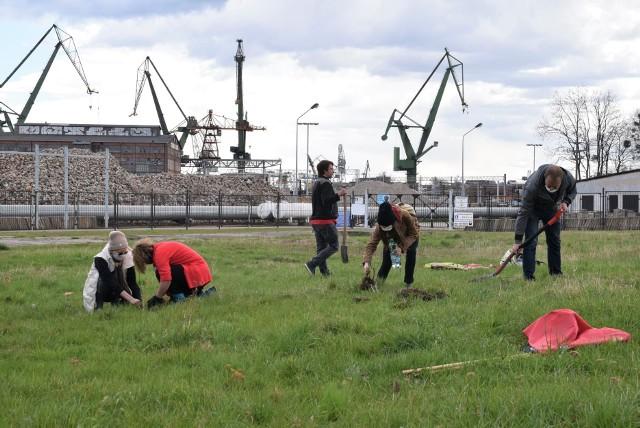 """W sobotę 24 kwietnia rozpoczęło się spontaniczne, """"prawie nielegalne"""" sadzenie drzew i kwiatów na terenie Trójmiasta, zorganizowane przez aktywistów proklimatycznego ruchu Extinction Rebellion."""