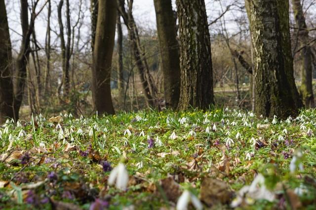 Mimo powracającego chłodu i zimowej aury Ogród Botaniczny jednak poczuł wiosnę i obudził się do życia