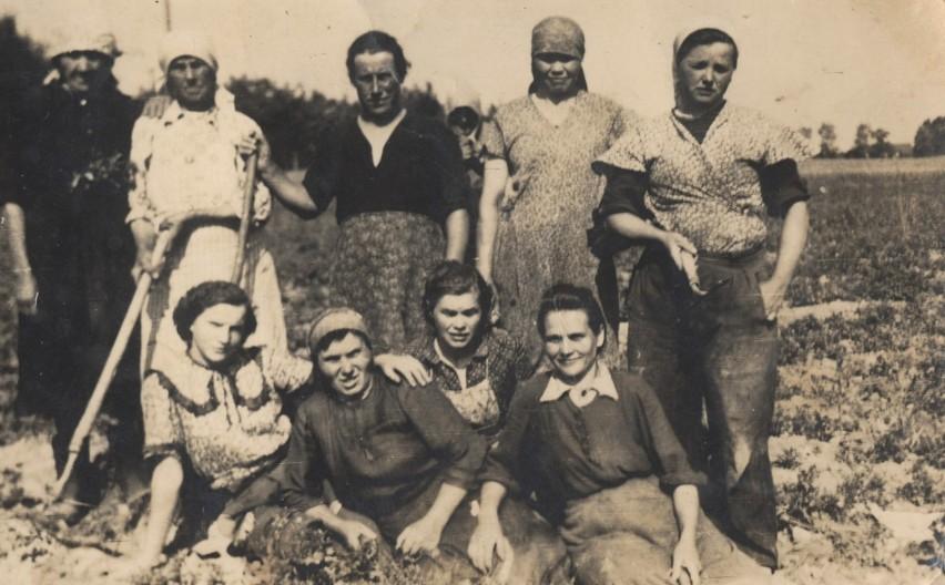 Tak kiedyś pracowało się na kujawsko-pomorskich polach....