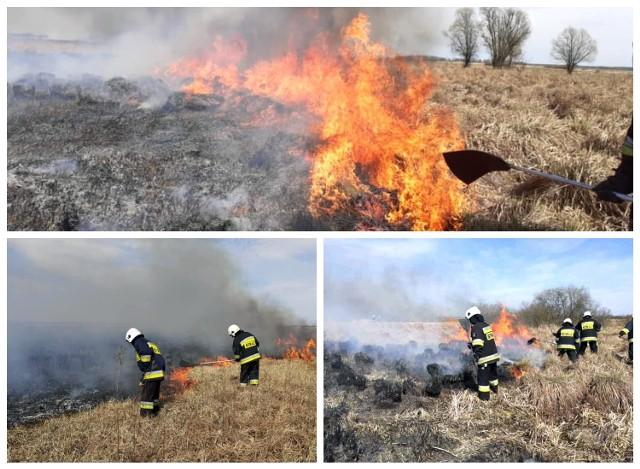 Podczas wielkanocnego weekendu strażacy z OSP Radziłów kilkukrotnie wyjeżdżali do pożarów w Biebrzańskim Parku Narodowymy