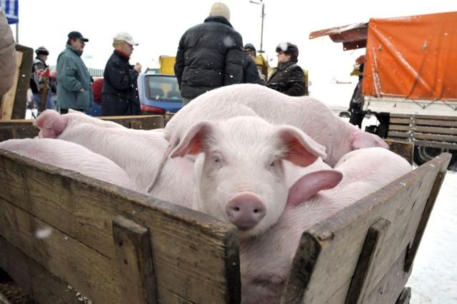 Wsparcie adresowane jest do gospodarzy prowadzących chów lub hodowlę zwierząt w rozumieniu przepisów o organizacji hodowli i rozrodzie zwierząt gospodarskich