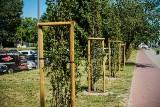 Mieszkańcy stawiają na zieleń. 1/4 projektów zgłoszonych do budżetu obywatelskiego 2022 r. dotyczy wzbogacenia Łodzi w roślinność