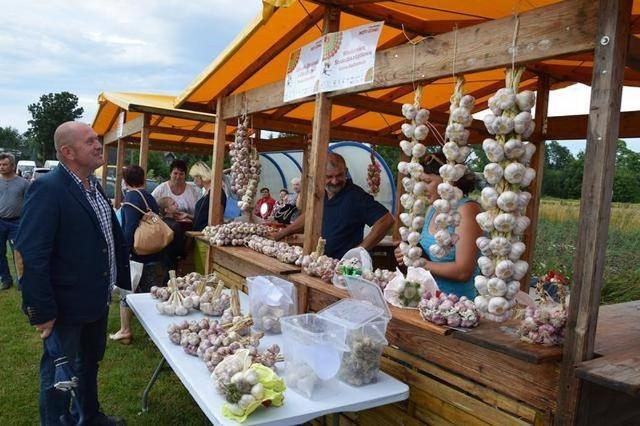 Zobacz zdjęcia z poprzednich edycji święta czosnku i produkcji czosnku
