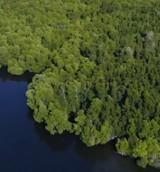"""Uwaga! Do tego lasu mają wstęp tylko nagie kobiety. Życie jak w filmie """"Seksmisja""""! ZDJĘCIA"""