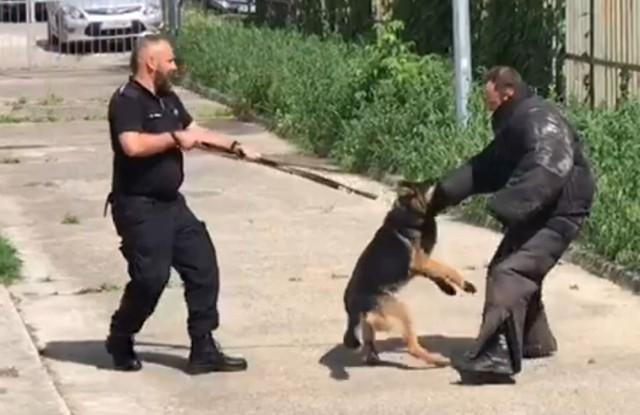 Szkolenie psów na policyjnym terenie przy ul. Iławskiej w Bydgoszczy prowadził asp. sztab. Krzysztof Furmaniuk, który może pochwalić się wieloletnim doświadczeniem z policyjnymi czworonogami
