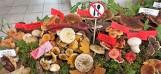 """""""Poznaj grzyby - unikniesz zatrucia"""". Ważna wystawa w chełmskim sanepidzie. Zobacz zdjęcia"""