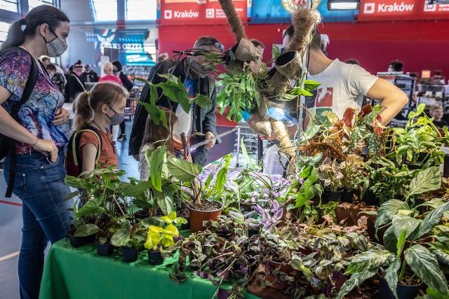 """W hali widowiskowo-sportowej przy ul. Niebieskiej miały  miejsce targi pt. """"Miejska Dżungla Kraków"""", na których można było podziwiać lub nabyć oryginalne i egzotyczne rośliny."""