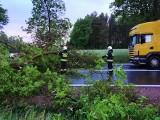 Suchowola. Powalone drzewo zablokowało DK 8 (zdjęcia)