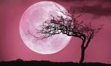 Truskawkowy Księżyc dziś na niebie. Wyjątkowy spektakl lada moment. Gdzie i o której oglądać niesamowity Księżyc?