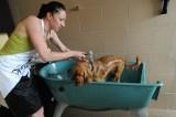 Pierwsza myjnia dla psów w Opolu