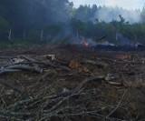 Pożar lasu pod Białogardem. W akcji gaśniczej wzięło udział 7 zastępów ZDJĘCIA, WIDEO