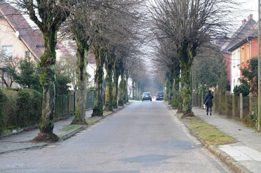 Drzewa przy ulicy Miłej w Bytowie jednak zostaną. Pod topór pójdzie ich maksymalnie 10