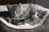 Takie są korzyści z posiadania kota. Zobacz najważniejsze z nich! [lista]