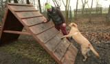 Wrocław ma dwa nowe place zabaw dla psów (ZDJĘCIA)