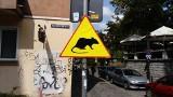 Uwaga, szczury! Gryzonie opanowały wrocławskie podwórka. Są nowe znaki