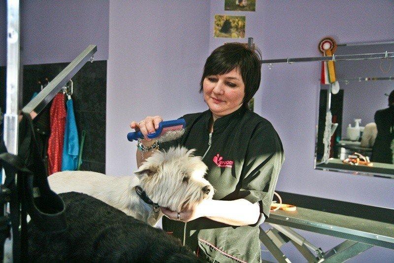 W Ustce Powstał Drugi Salon Fryzjerski Dla Psów Głos Pomorza