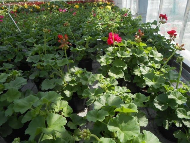 Kwiaty Najlepsze Na Balkon Jak Dobrać Rośliny I O Nie Dbać