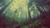 Śmiertelnie trujące rośliny Małopolski. Ich zjedzenie może skończyć się zatruciem, paraliżem, a nawet śmiercią [ZDJĘCIA]