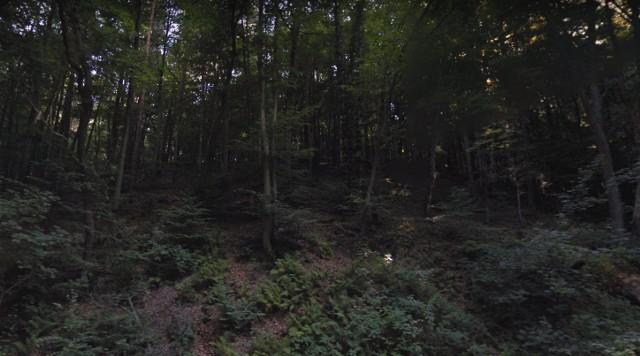 Wąwóz Kochanowski. Zielone tereny w rejonie Kleszczowa