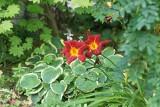Kwiaty na zacieniony balkon. Najlepsze rośliny do cienistego ogrodu to paprocie, liliowce i hosty. Kwiaty lubiące cień! 29.07.2021
