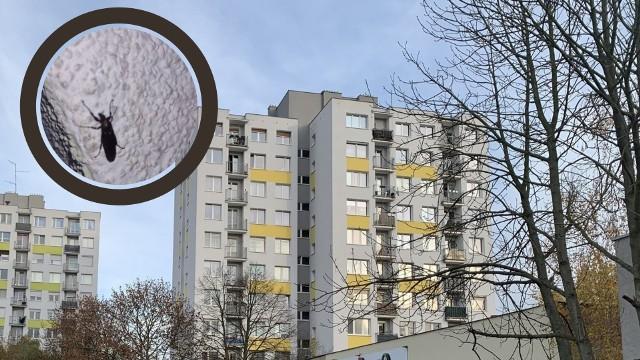 Mieszkańcy Zielonej Góry alarmują, że w ostatnich dniach w mieście pojawiło się sporo owadów: wchodzą do mieszkań, wszędzie ich pełno.