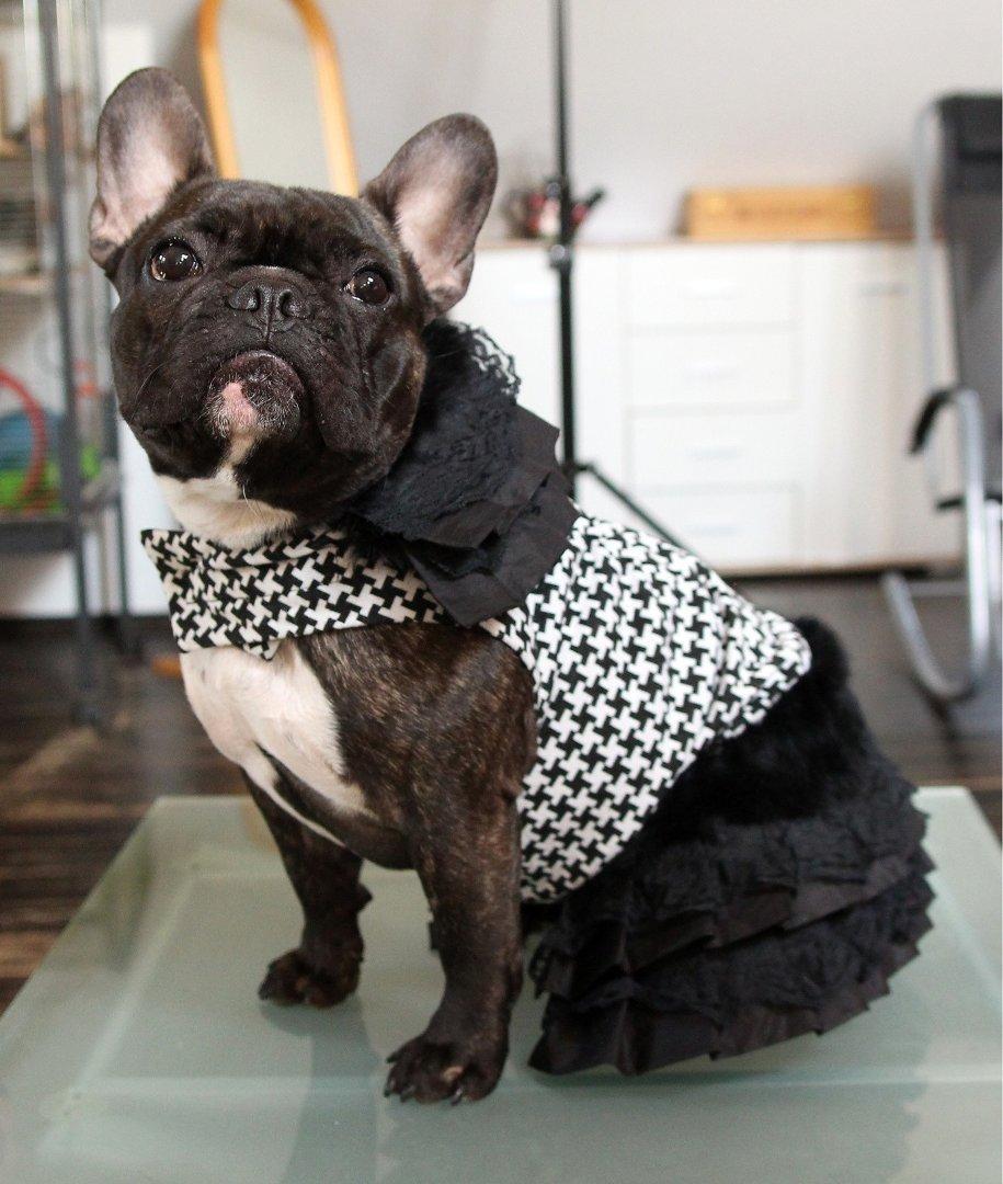 2266b62b5a4e2 Ubranka dla psów: wady i zalety. Konieczność czy fanaberia ...
