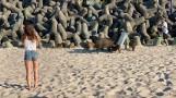 Rodzina dzików na plaży w Mielnie. Przyszły na... wyżerkę! [WIDEO, ZDJĘCIA]